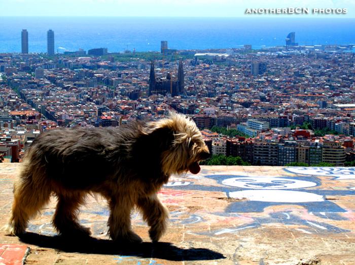 panoramica barcelona bunker