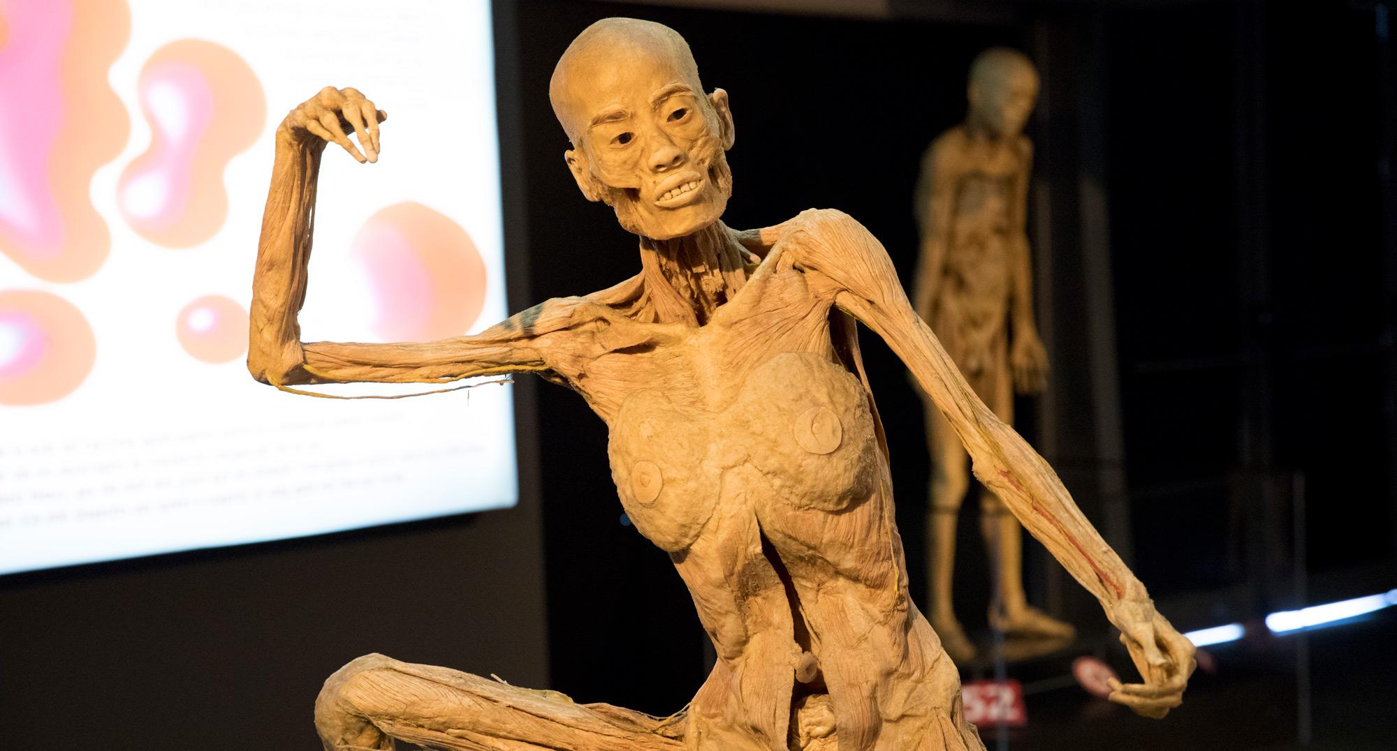 Exposición Human Bodies Barcelona